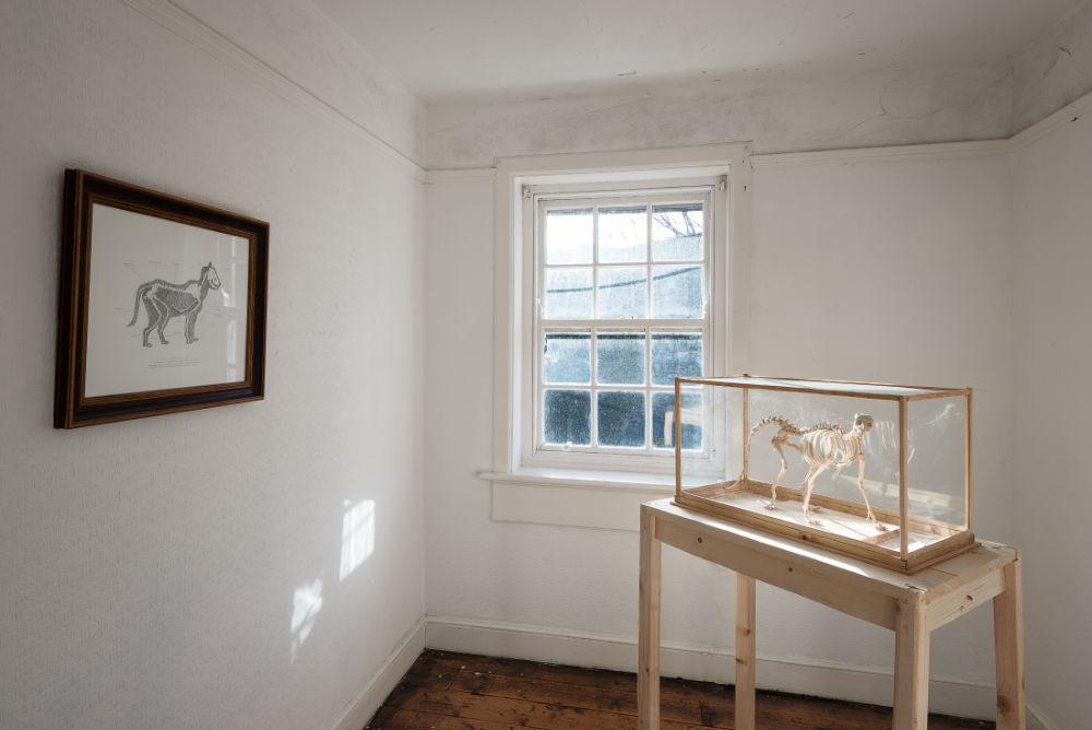 Image: Peter Nash, 'Domestic Animal' installation. Courtesy of the Artist. Photo: Jed Niezgoda