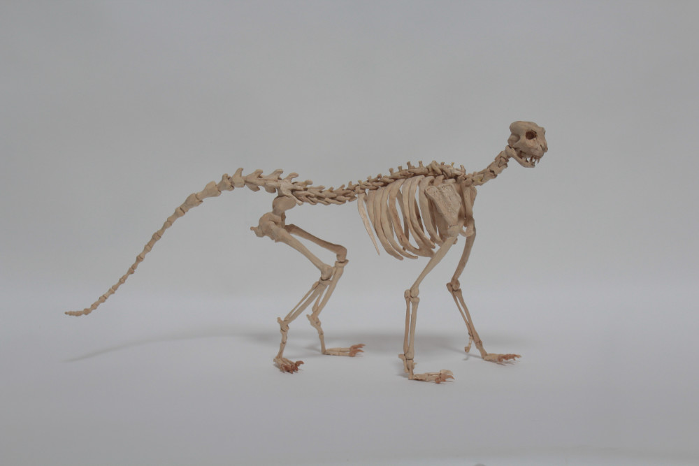 Image: Peter Nash, 'Domestic Animal', 2018, found timber, carved beechwood, steel wire, lace pins. Courtesy of the Artist.