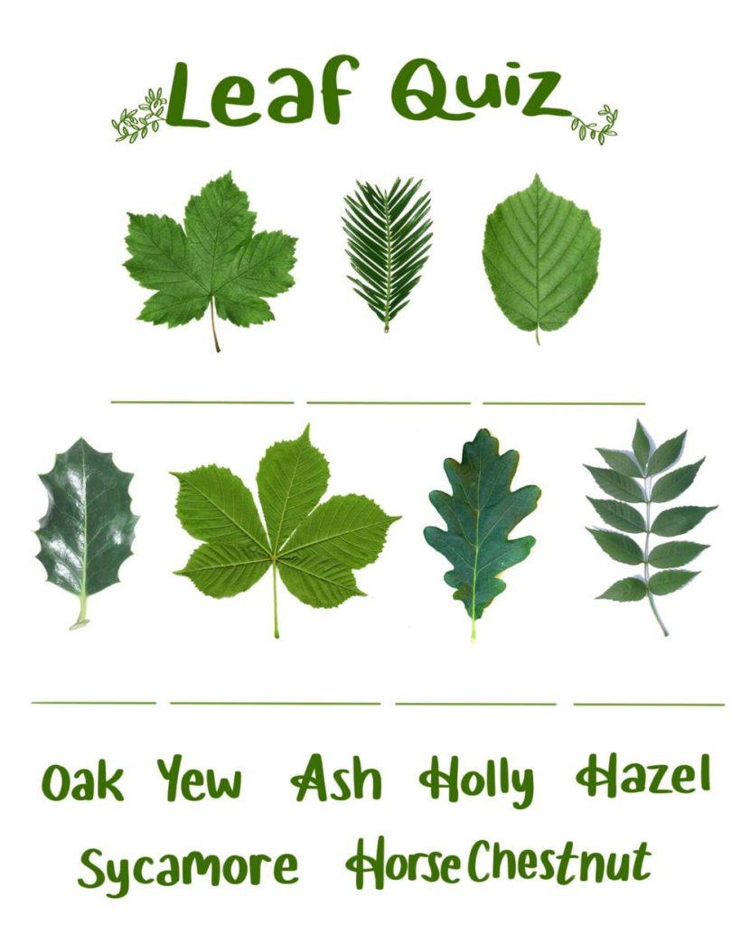 Leaf Quiz